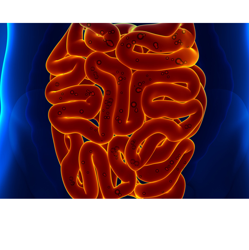 The Health of your Gut…More important than you think!